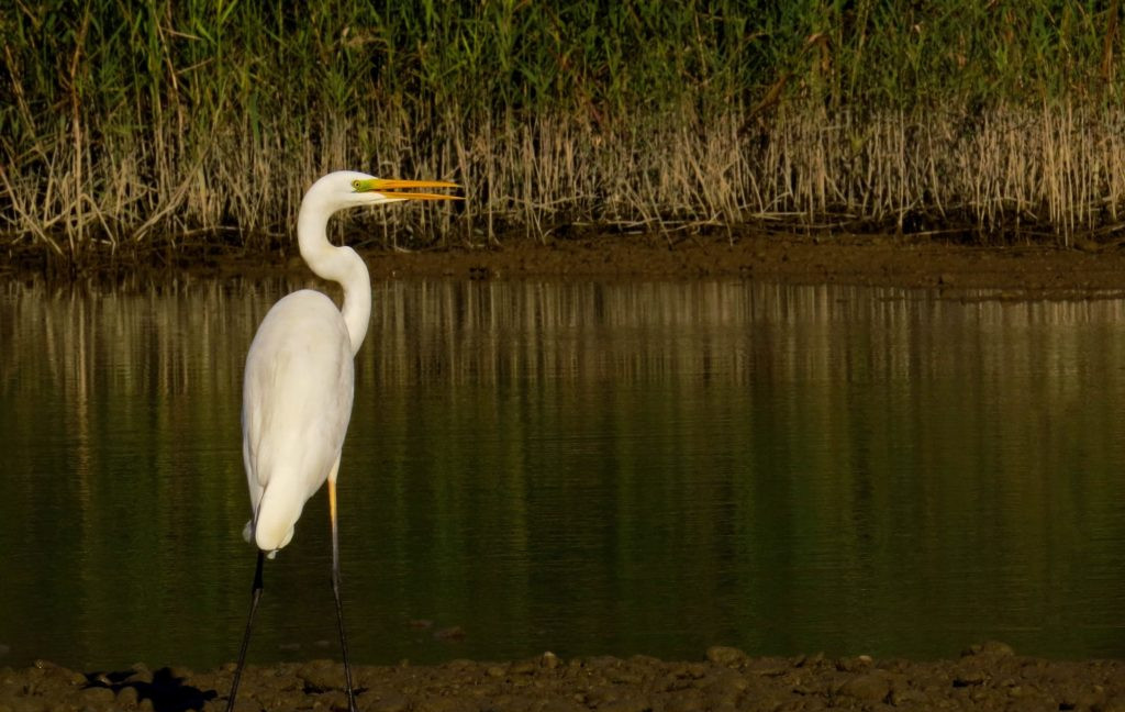 heron standing on a riverbank